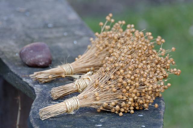 semillas de lino reco